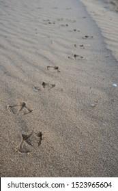 Bird footprints over the sand
