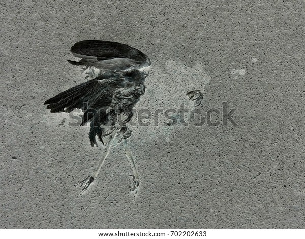 bird fossil on ground
