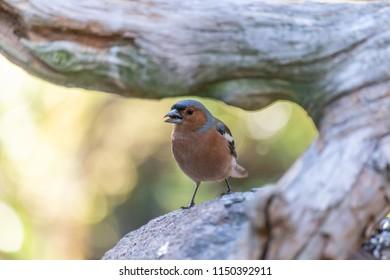 Bird framed in wood
