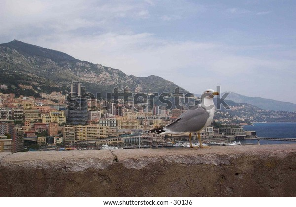 A bird in front of the Monaco's quay