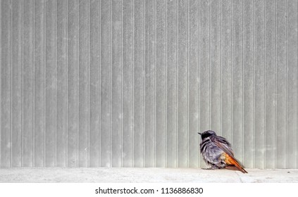 bird in front of wall