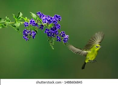 The bird is fying away