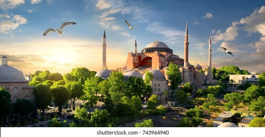 Bird and Hagia Sophia at sunset in Istanbul, Turkey.