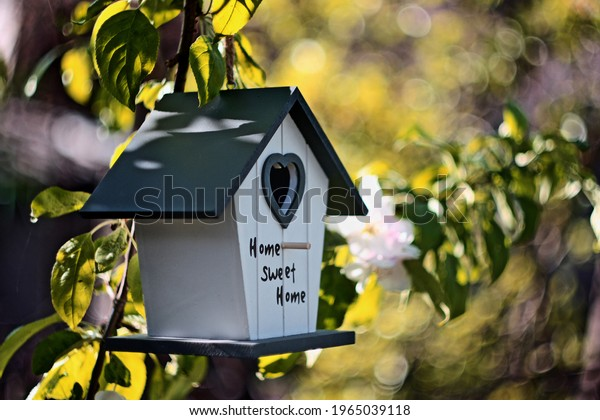 Bird house in the blossoming apple tree. Selective focus