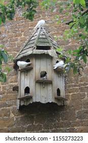 bird house doves