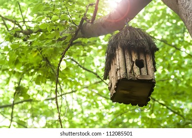 Bird house hanging from the tree with the entrance hole in the shape of a heart. Beech Forest