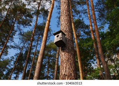Bird house on a tree in a forest.