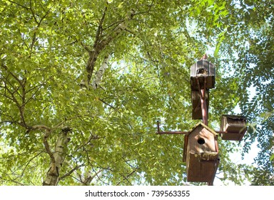 bird houses in forest