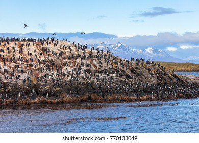 Bird Island in the Beagle Channel near the Ushuaia city. Ushuaia is the capital of Tierra del Fuego province, Argentina.