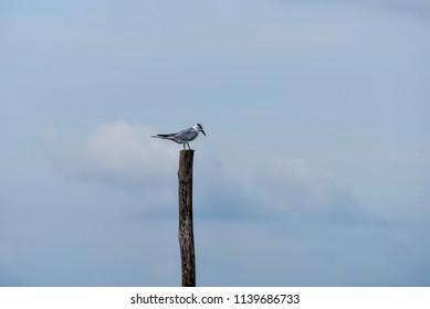 Bird Island on a branch