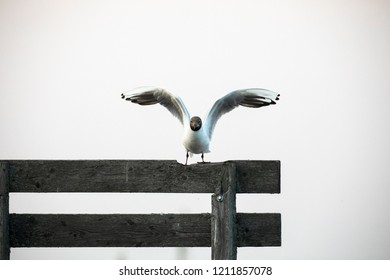 Bird landing on the wooden stick