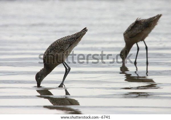 bird with long beak, long legs on the shore