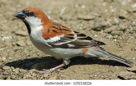 Bird is looking for Danone