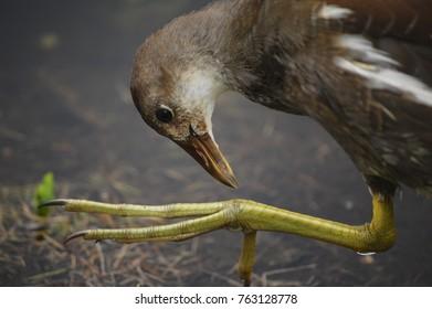 Bird looking a huge feet