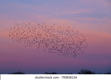 bird migration, flock of migrating birds, migrating birds at sunset