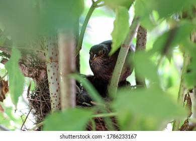 Bird mother guards her sleeping chick in the nest hidden in the branches