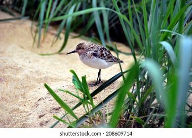 bird in natural habitat