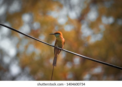 THE BIRD NATURE PHOTO GRAPHY