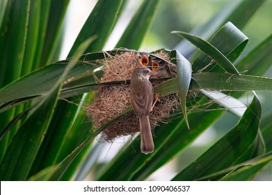 A bird with its nest.