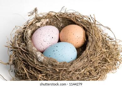 in a bird nest