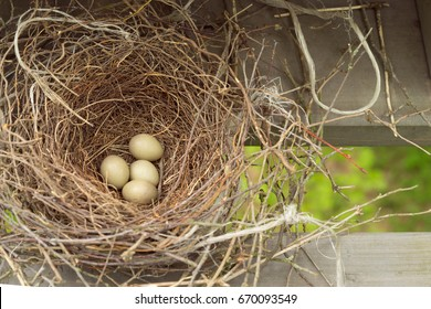 Bird nest with the beige eggs on the housetop, natural summer concept