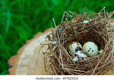 Bird nest decorated with flowers with three eggs inside on rustic wooden surface