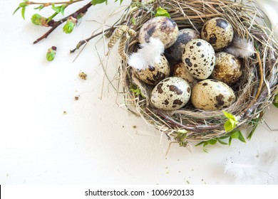 Bird nest with Easter Eggs on white background. Quail easter eggs with spring green leaves and feathers in nest on white table with copy space. Spring, Easter or healthy organic food concept.