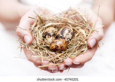 Bird nest with egg in the hands,