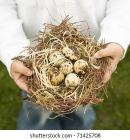 Bird nest with eggs in child hands