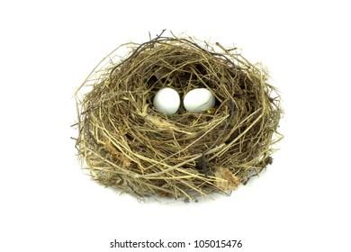 Bird nest and eggs on white background