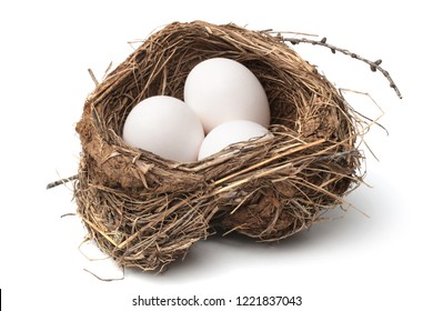 Bird nest with eggs on white background