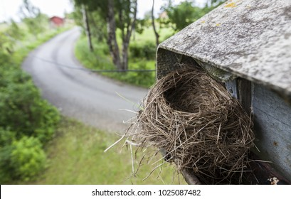 Bird nest in gutter causes problems when the gutter gets clogged. Photographed after chicks have left the nest, before removing the nest.
