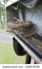 Bird nest in gutter causes problems when the gutter gets clogged.