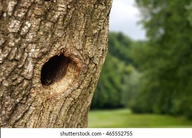 Bird nest in the hollow tree trunk