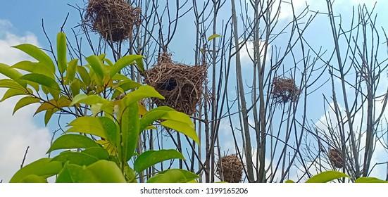 Bird Weaverbird Images, Stock Photos & Vectors | Shutterstock