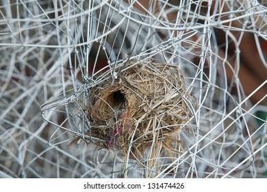 bird nest in metal wire construction.