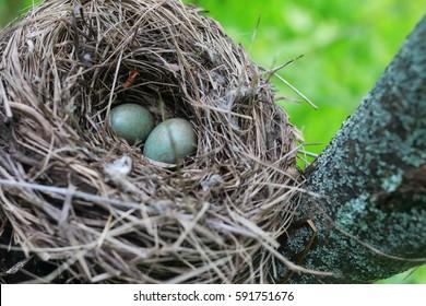 bird nest in nature