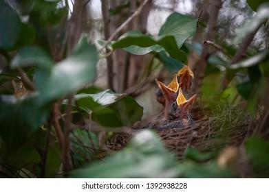 Bird nest with nestling on the tree