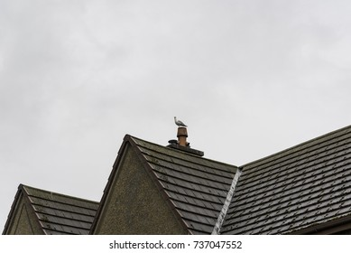 bird nest on a house chimney in an old scottish village in the highlands