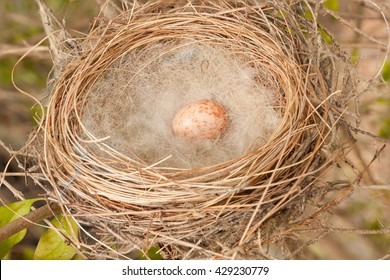 A bird nest in a tree with a single egg