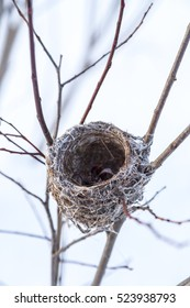 Bird Nest in Winter