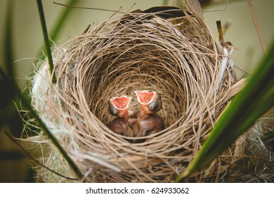Bird nest with young birds