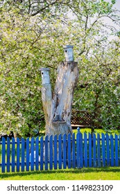 Bird nesting box on the tree and blue wooden fence in Nida resort town near Klaipeda in Neringa on the Curonian Spit and the Baltic Sea in Lithuania.