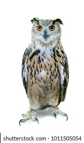 Bird of night, bird of pray, owl isolated on white background. This has clipping path.