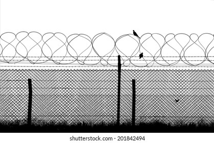 Bird on a barbed wire, isolated on the white background, silhouette
