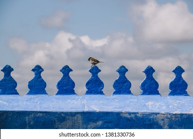 A bird on a blue balustrade of a terrace in the medina of Chefchaouen, northwest Morocco. The town is famous for its buildings in shades of blue.