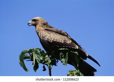 Bird on branch, close-up
