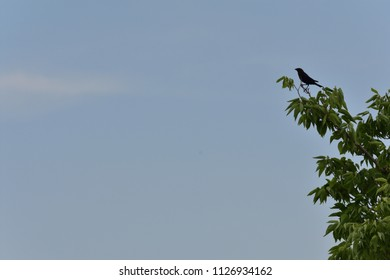 Bird on branch, facing left