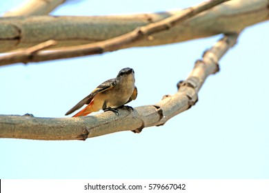 The bird on branch in nature