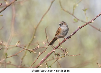 Bird on a branch with a soft back ground